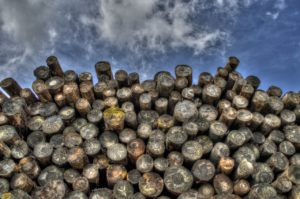 Biomasse Holz